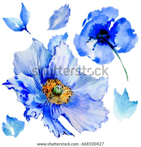 Wildflower poppy flower in a watercolor style isolated. Full name of the plant: poppy, papaver,  opium. Aquarelle wild flower for background, texture, wrapper pattern, frame or border. #668100427