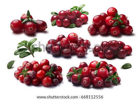 Cranberries, lingonberries (Vaccinium family) in piles, with and without leaves. Clipping paths for each object, shadows separated #668112556