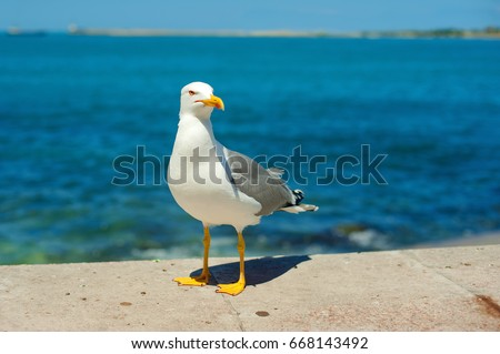 seagull running on the shore Close up view of white birds seagulls walking by the beach against natural blue water background. A seagull staring at the camera. Royalty-Free Stock Photo #668143492