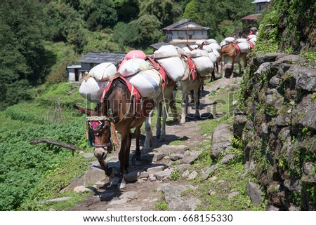 Horses on Annapurna sanctuary trek in Nepal Himalaya #668155330