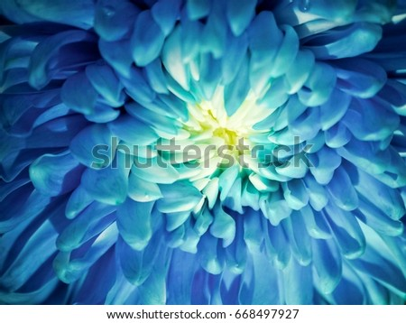 Beautiful flower collection. #668497927