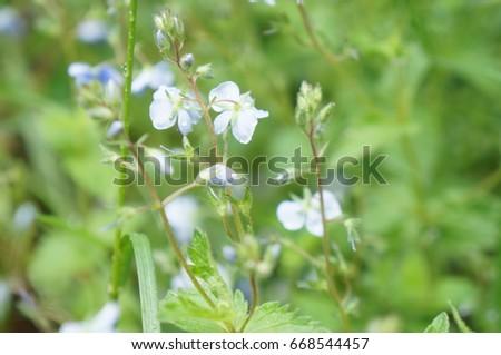 Tender spring and summer flowers #668544457