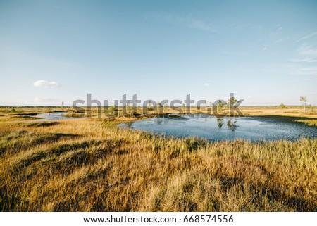 Bog, morass, swamp, marsh ecology system with duckweed #668574556
