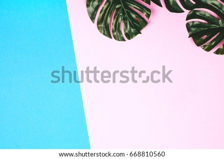 Pink and blue pastel background with tropical leaves, flat lay. #668810560