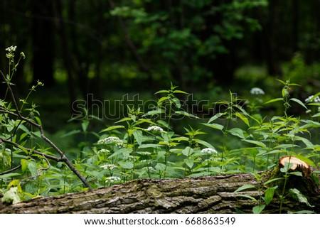 Forest Glade. Fallen tree. Nettle. Vegetable background #668863549