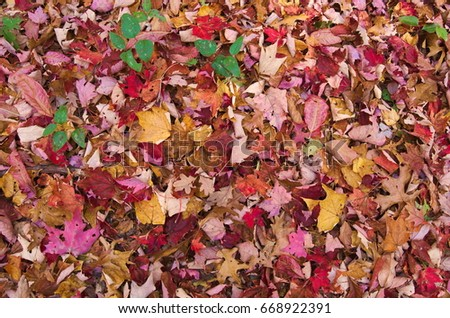 Ground Fall Leaves #668922391