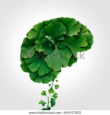 Ginkgo Biloba brain as a herbal medicine concept and natural phytotherapy medication symbol for healing as leaves shaped as a thinking human organ. #669417832