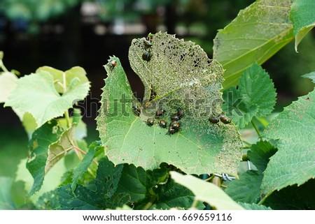 Beetles on Leaves #669659116
