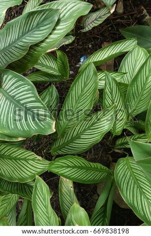 Green leaf texture. Leaf texture background #669838198