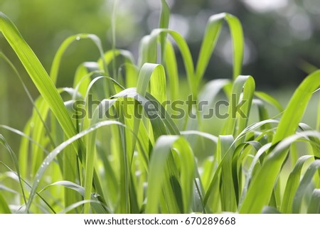 green grass background #670289668