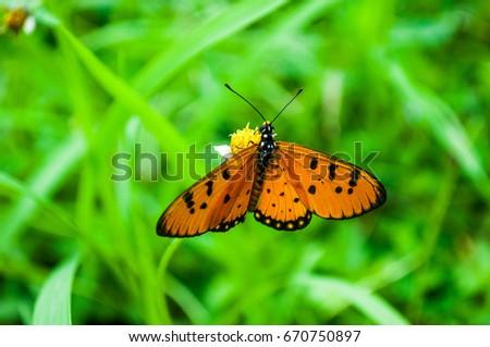 Small orange butterfly #670750897