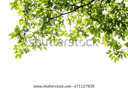 Green leaf and branches on white background Royalty-Free Stock Photo #671127838