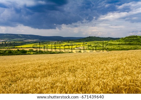 Wheat field and countryside scenery  #671439640