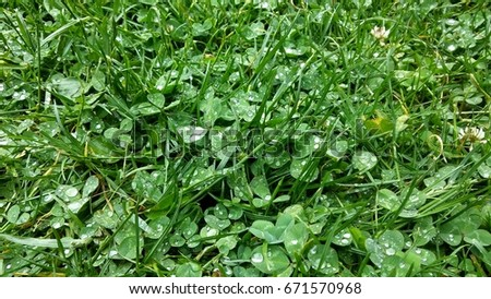 The grass with the droplets rains on it #671570968
