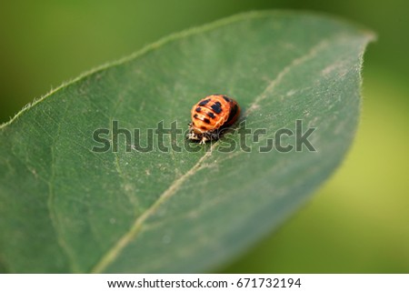 pupa of a ladybird #671732194
