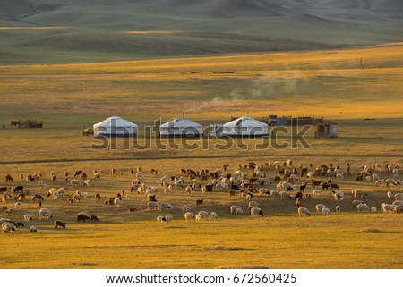 """""""GER"""" Mongolia accommodation and goat herd. #672560425"""