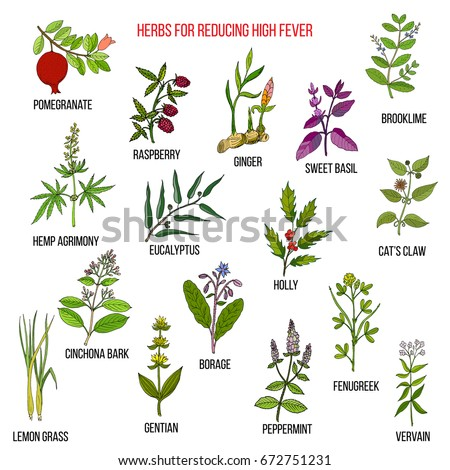 Best herbal remedies for reducing high fever . Hand drawn vector set of medicinal plants #672751231
