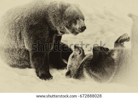 Brown Bears (Ursus arctos) in Lake Clark National Park, Alaska, USA #672888028