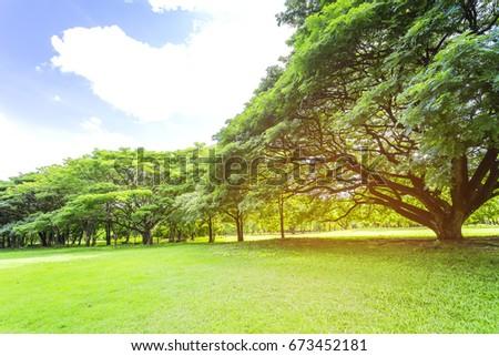 Under big tree in the garden , warm light effect #673452181