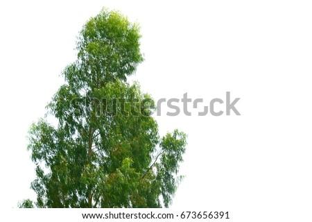 isolated tree on white background #673656391