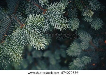 Fir tree brunch close up. Shallow focus. Fluffy fir tree brunch close up. Christmas wallpaper concept. Copy space. #674070859