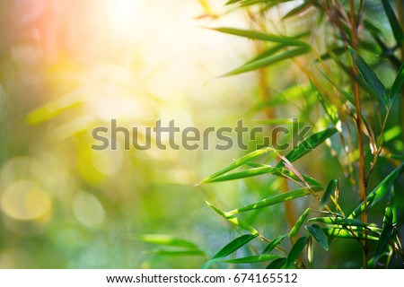 Bamboo. Bamboos Forest. Growing bamboo border design over blurred sunny background. Closeup. Japanese garden design, gardening. Spa, Zen concept. Border art. Space for your text. Nature backdrop Royalty-Free Stock Photo #674165512