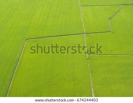 Aerial  view from flying drone of  Field rice  with landscape green pattern nature background at Phra Nakhon Si Ayutthaya, Thailand. #674244403