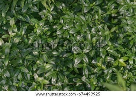 Green leaves. Garden flowers. Summer time. #674499925