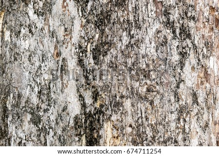 Tree bark texture background. #674711254