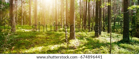 Wild forest panorama. Ecology summer beautiful background #674896441