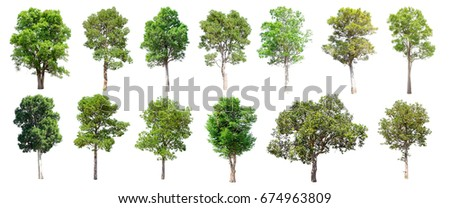 Collection of Isolated Trees on white background , A beautiful trees from Thailand , Suitable for use in architectural design , Decoration work ,  Used with natural articles both on print and website. #674963809