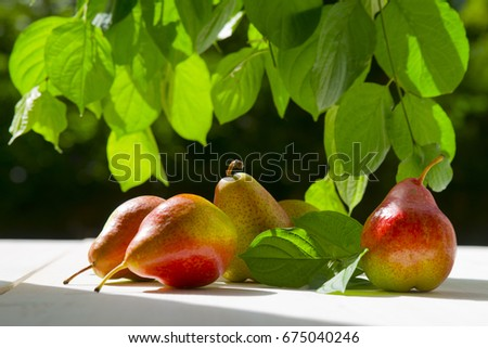 Pears summer sunlight green leaves wooden white background #675040246