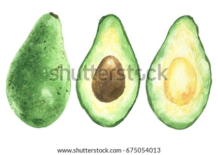 Hand drawn watercolor avocado, green sliced half with pit, food art isolated on white background