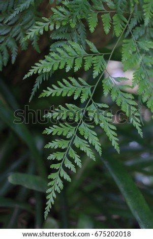 Green leave of fern in the forest.selective focus. #675202018