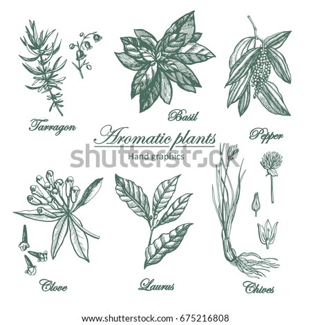 Graphic set of aromatic plants. Set of graphic images. Illustration for greeting cards, invitations, and other printing projects. #675216808