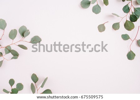 Beautiful eucalyptus branches frame on pale pastel pink background. Flat lay, top view. Lifestyle composition. #675509575