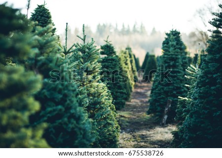 Trees in Rows at a Christmas Tree Farm Royalty-Free Stock Photo #675538726