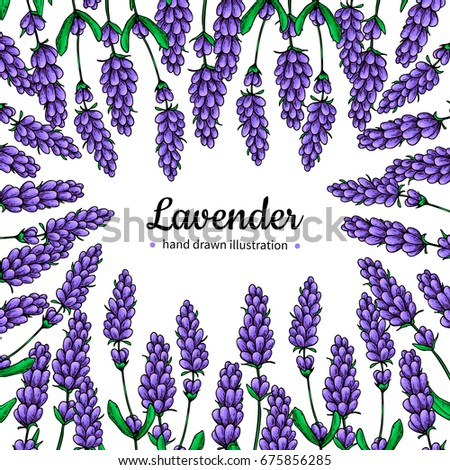 Lavender drawing frame. Isolated wild flower and leaves. Herbal artistic style illustration. Detailed botanical sketch for label, banner of organic cosmetic, medicine, beauty store, perfume #675856285