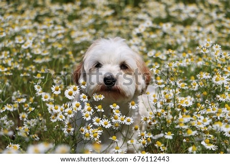 little dog is sitting in a field of flowers #676112443
