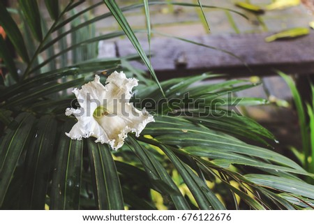 white flower on on green leaves with soft-focus and over light in the background #676122676
