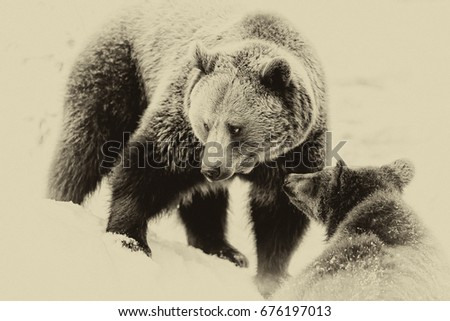 Brown Bears (Ursus arctos) in Lake Clark National Park, Alaska, USA #676197013