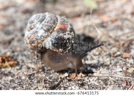 sandy snail crawl on forest path #676413175