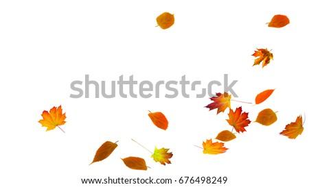 falling autumn foliage on white background, isolated colorful fall leaf  Royalty-Free Stock Photo #676498249