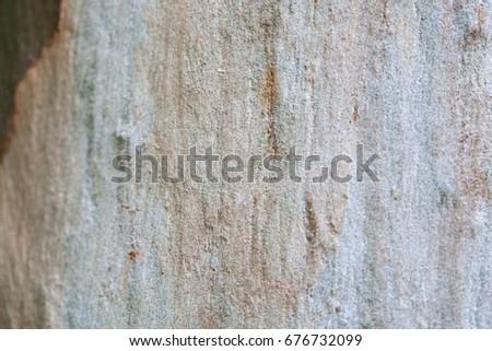 tree bark  #676732099