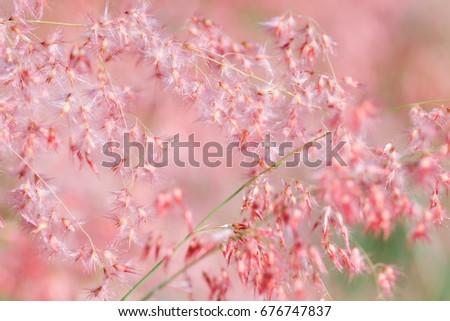 Flower grass pink background #676747837