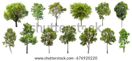 Collection of Isolated Trees on white background , A beautiful trees from Thailand , Suitable for use in architectural design , Decoration work ,  Used with natural articles both on print and website. #676920220
