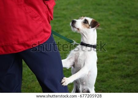 Sports dog. #677205928