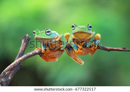 Tree frog sitting on branch #677322517