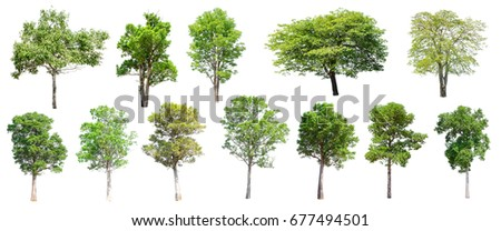 Collection of Isolated Trees on white background , A beautiful trees from Thailand , Suitable for use in architectural design , Decoration work ,  Used with natural articles both on print and website. #677494501
