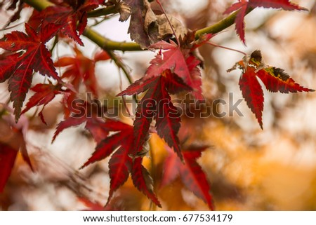 The colors of autumn leaves #677534179